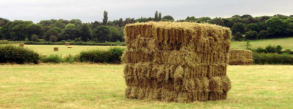 Square hay bale, produced by Harrogate Hay
