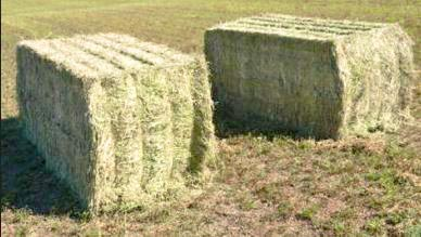 Harrogate Hay supply different sizes of square hay bales